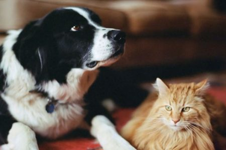 Why cats won't punish a stranger who harms you
